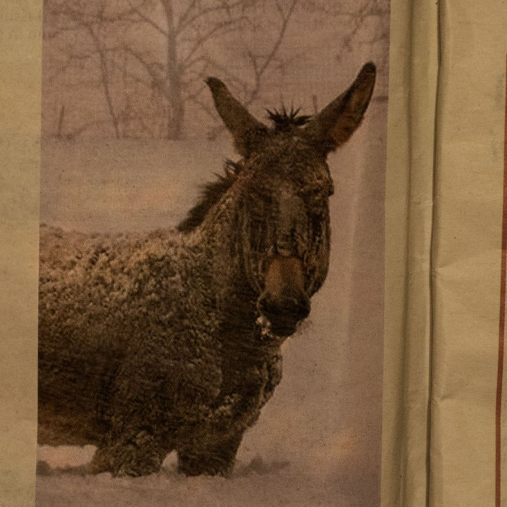 donkey-on-snow-paper
